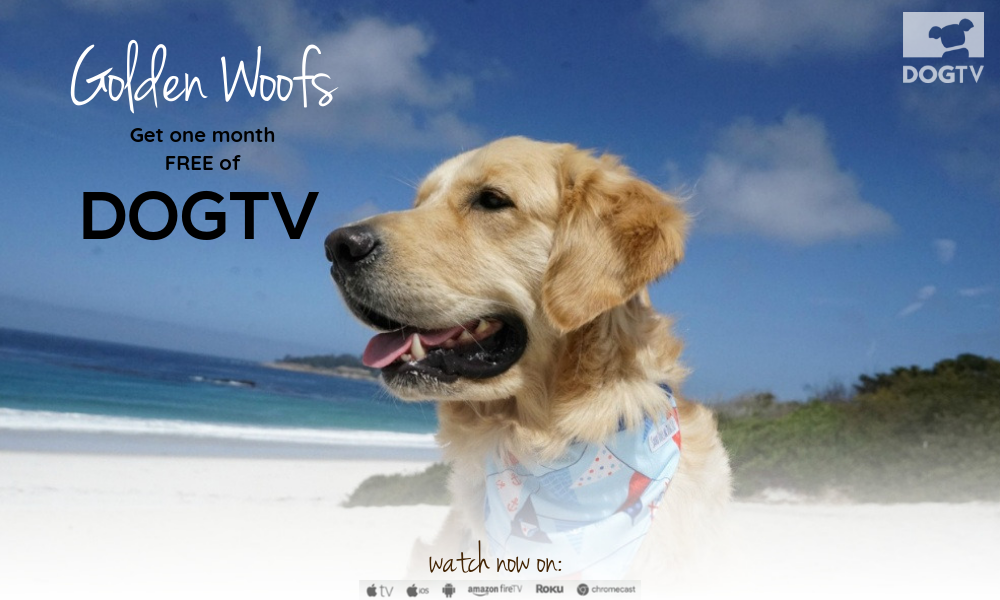 Get a month FREE of DOGTV.